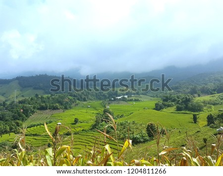Green rice fields with mountain and misty background at Pa Bong Pieng in Chiang Mai, Thailand.  #1204811266