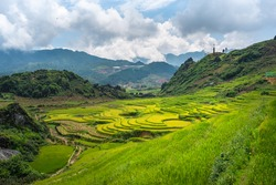 Green rice fields with the mountain in Sapa Vietnam