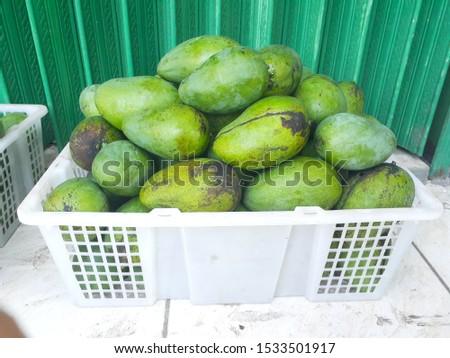 green riped mango on bark