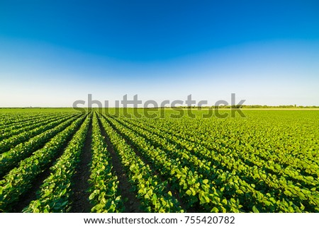 Green ripening soybean field, agricultural landscape #755420782