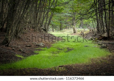 Green road in the forest