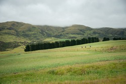 Green rolling hills of Central Otago. Three people cycling the Otago Rail Trail, South Island, New Zealand