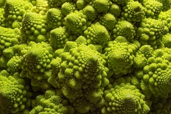 Green Romanesco broccoli. macro photo. Natural fractal patterns