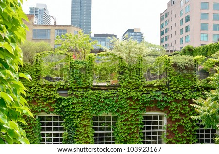 Green Roof garden in urban setting
