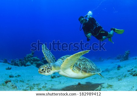 Green Sea Turtle and Scuba Diver #182989412