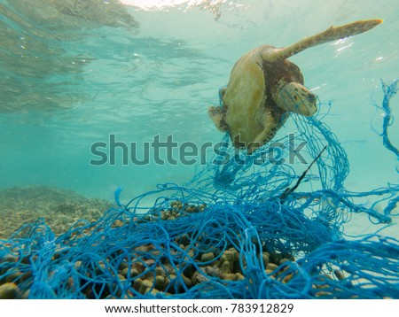 Green sea turtle entangled in a discarded fishing net - Shutterstock ID 783912829