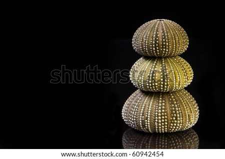 Green Sea Urchins on black background with copy space