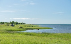 Green seaside pasture, bright green reed and grass under blue sky. Nordic meandering coast of tiny island Muhu. Warm sunny midsummer day. Tranquil Baltic Sea. Estonian coastline.