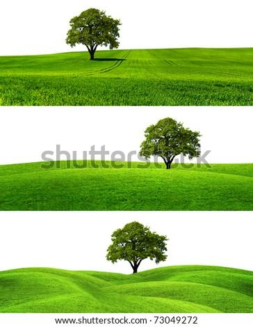 Green season #73049272