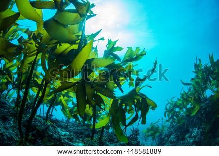 Photo of  Green Seaweed