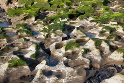 Green seaweed and algae growing on white rocks with blue sky reflected in water pools. Cluster of unusual alien-like eroded rocks nearby Atlantic Ocean, in El Medano, Tenerife, Canary Islands, Spain.