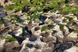 Green seaweed and algae growing on white rocks with blue sky reflected in water pools. Cluster of unusual alien-like eroded rocks nearby Atlantic Ocean, in El Medano, Tenerife, Canary Islands, Spain.