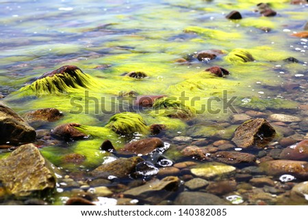 green seaweed in sea water
