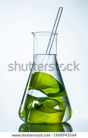 Green seaweed with glass rod in flask on white background.
