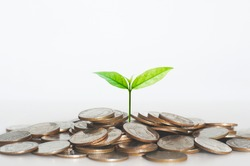 green seed growth on coins stack with white background. money saving. business investment successful growing concept.
