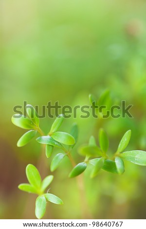 Green seedling grows in spring.