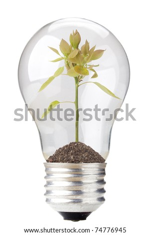 Green seedling in a light bulb isolated on a white background.