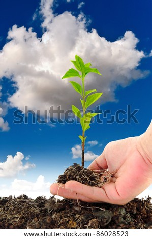 Green seedling in hand on sky background