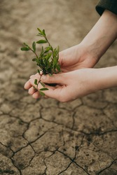 Green seedling in human hands on a background of dry earth with cracks. Man planting a plant. Environmental problems of the Earth, global warming, agriculture.