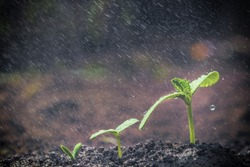 Green seedlings growing for business concepts
