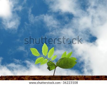 Green seedlings illustrating, new life - stock photo