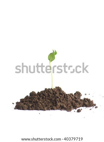 Green seedlings in soil�Isolated in white background