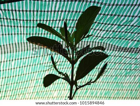 green shading net #1015894846