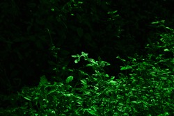 green shiney leaf with dark black background