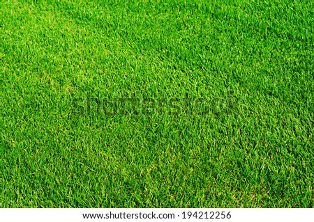 Green shiny grass at the football field - Shutterstock ID 194212256