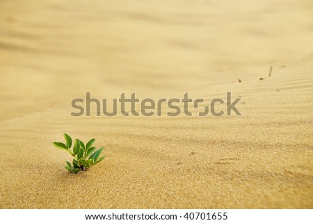 Green shoot in the desert - conceptual photo for growth in adverse conditions