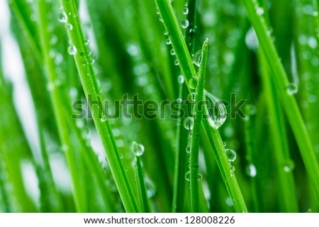 green shoots of spring grass in water drops macro lens shot