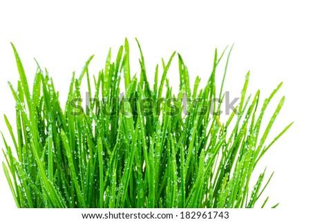 green shoots of spring grass in water drops macro lens shot