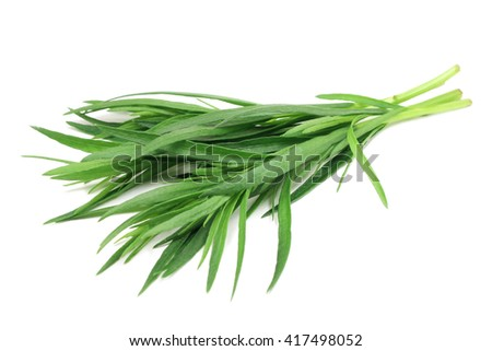 green shoots of tarragon on white background #417498052