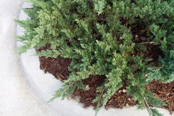 Green Shrubbery on a White Corner Curb