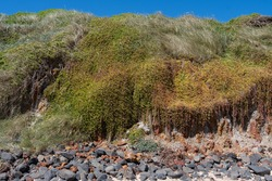 green shrubbery on the beach