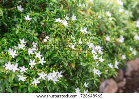 Green shrubs and small white flowers in the garden ez canvas green shrubs and small white flowers in the garden mightylinksfo