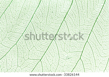 Green skeleton leaf