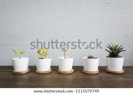 green small cactus pot collection, closeup image #1115079749