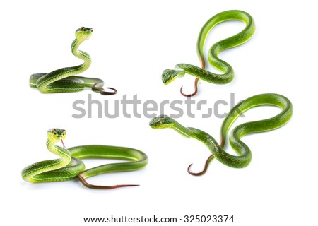 Stock Photo Green snake