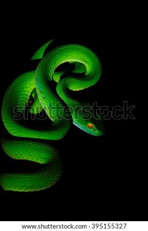 Stock Photo green snake