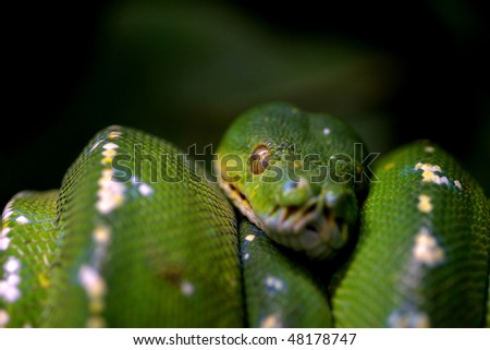 Green snake curled up on a branch, nature animal photo