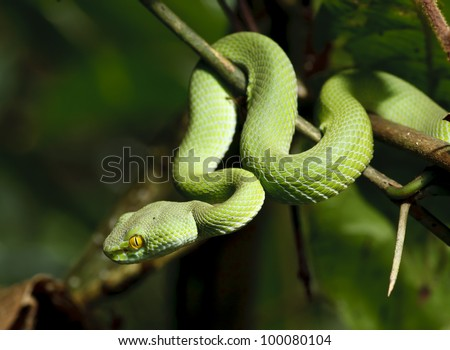 Green snake in rain forest, Thailand