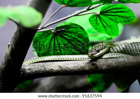 green snake in Thailand jungle