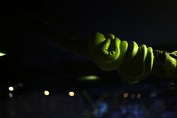 green snake in the dark shadow at Aquaria Phuket.