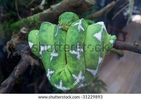 green snake in tree