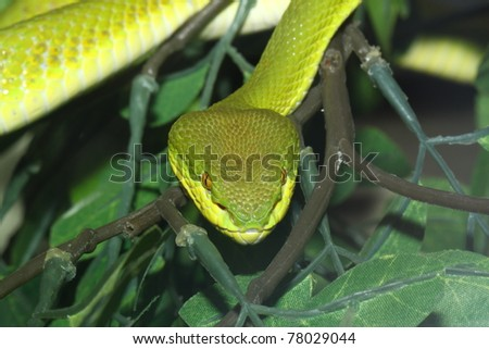 green snake in zoo