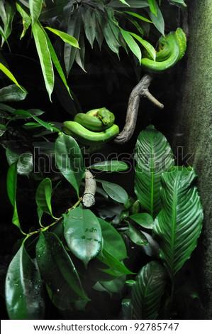 green snake in zoo