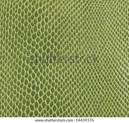 Green Snake Skin Texture
