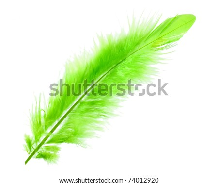 Green soft feather on white background