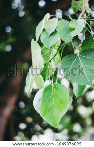 Green soothing leaves on its branch with bokeh background, nature photo